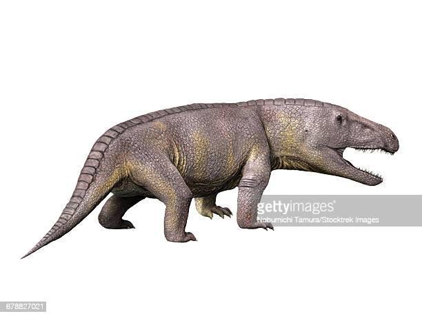 ilustraciones, imágenes clip art, dibujos animados e iconos de stock de erythrosuchus africanus reptile from the middle triassic of south africa. - triásico