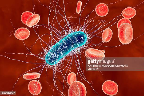 Escherichia coli bacteria, illustration