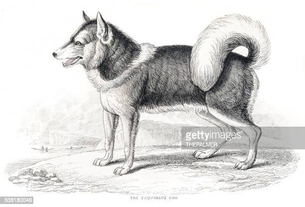 Eskimo dog engraving 1840