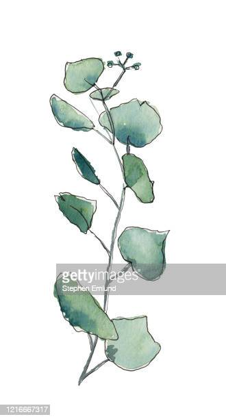 ユーカリの木の枝と葉 - オリジナルの水彩画 - ユーカリの葉点のイラスト素材/クリップアート素材/マンガ素材/アイコン素材