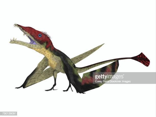 ilustraciones, imágenes clip art, dibujos animados e iconos de stock de eudimorphodon flying reptile.  - triásico