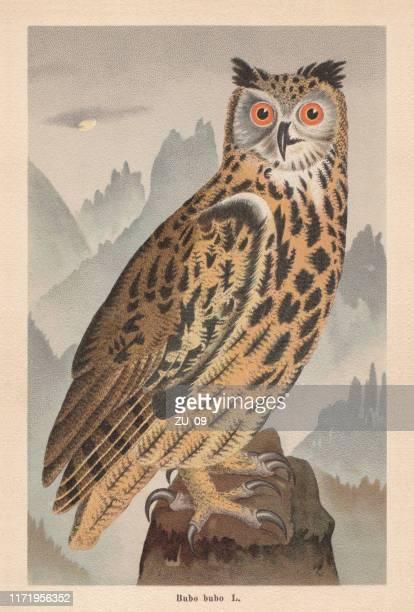 illustrations, cliparts, dessins animés et icônes de aigle-hibou eurasien (bubo bubo), chromolithographe, publié en 1896 - chouette