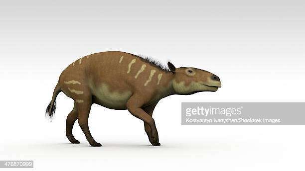 Eurohippus, an extinct genus of equid ungulate, white background.