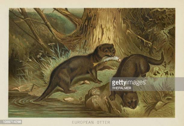 stockillustraties, clipart, cartoons en iconen met europese otter chromolithograph 1896 - zoogdier