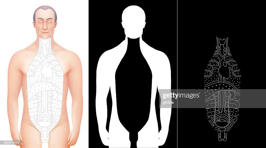 Excised Male Anatomy Model With Outlined Organs With Alpha Channels ...