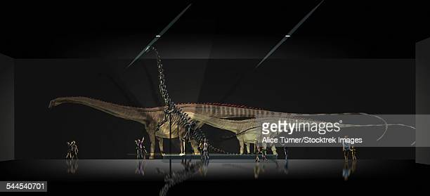 Exhibition space featuring Diplodocus longus