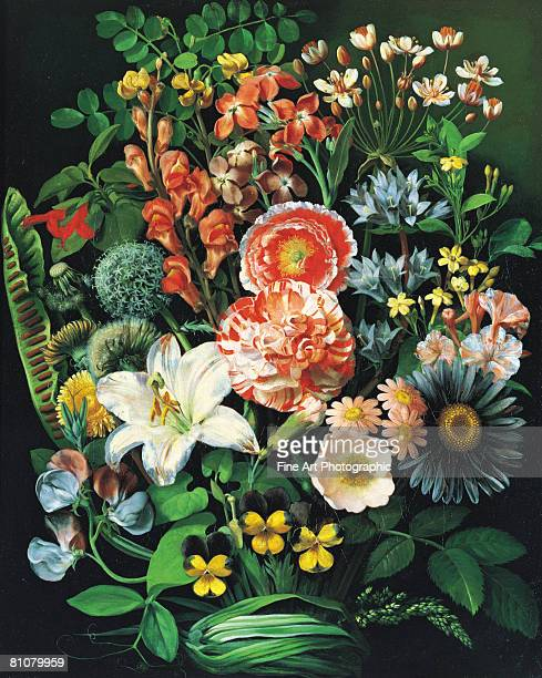 exotic flowers - archival stock illustrations