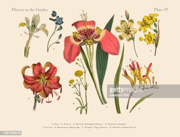 ilustrações de stock, clip art, desenhos animados e ícones de exotic flowers of the garden, victorian botanical illustration - litografia