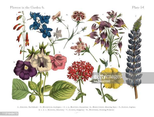 ilustrações de stock, clip art, desenhos animados e ícones de exotic flowers of the garden, victorian botanical illustration - cravo cravo da china