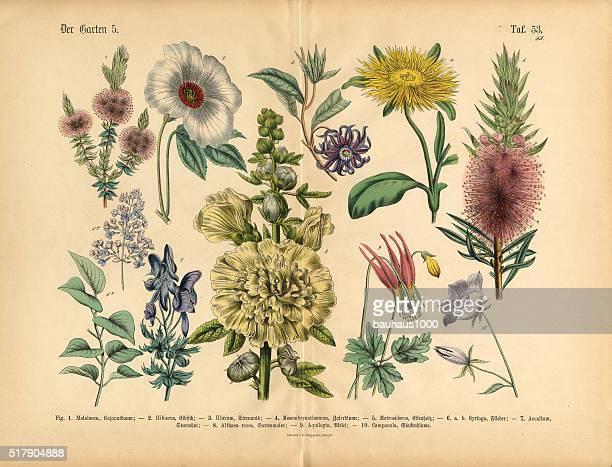 Flores exóticas del jardín botánico de estilo victoriano ilustración