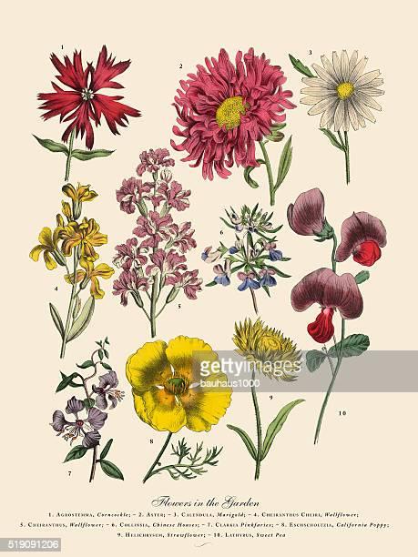 ilustrações de stock, clip art, desenhos animados e ícones de exótico flores no jardim, vitoriano ilustração floral - litografia