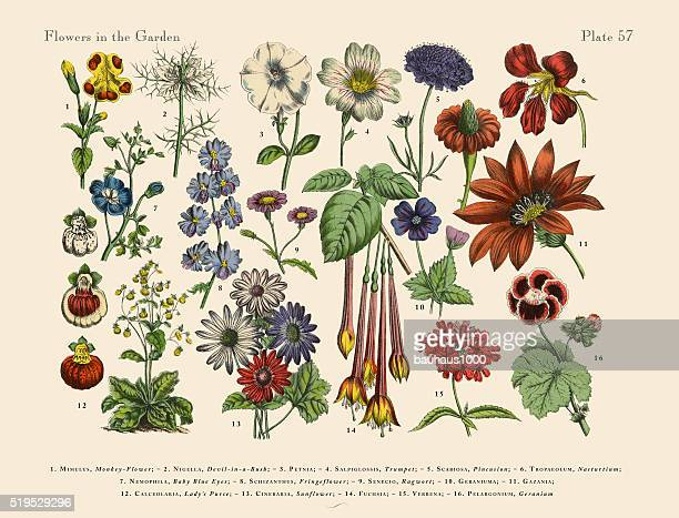 exotic flowers of the garden, victorian botanical illustration - perennial stock illustrations, clip art, cartoons, & icons