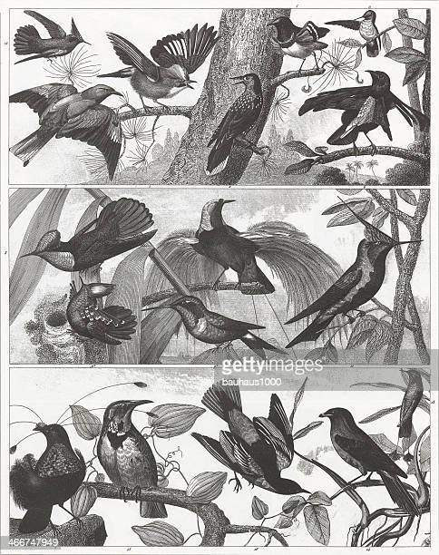 Exotic, Tropical & Songbird Engraving