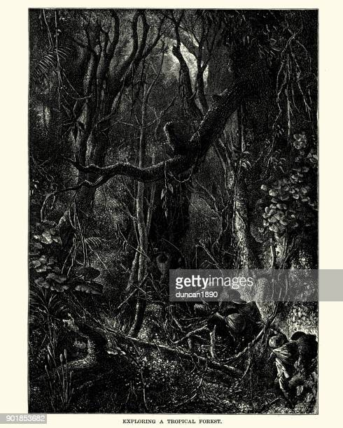 Exploring a tropical forest, South America, 19th Century