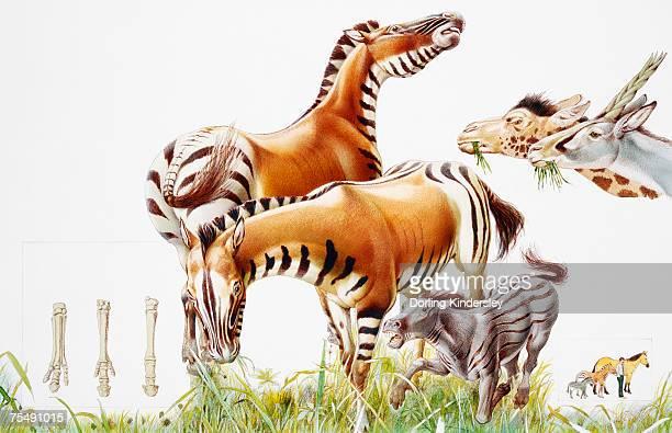 ilustraciones, imágenes clip art, dibujos animados e iconos de stock de extinct zebras on savanna - animal extinto