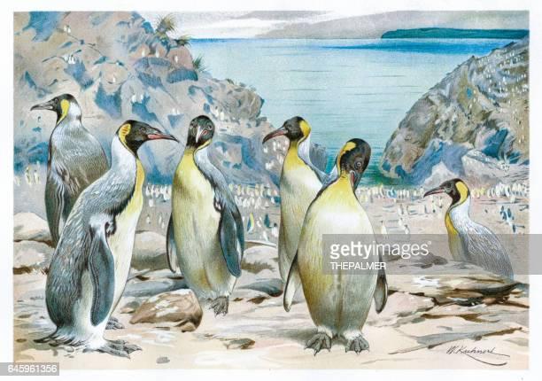 ilustraciones, imágenes clip art, dibujos animados e iconos de stock de vislumbrado pachydyptes pingüinos grabado 1892 - animal extinto