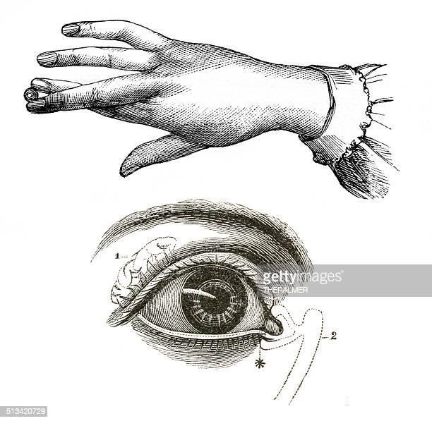 ilustrações, clipart, desenhos animados e ícones de desenhos à mão e anatomia dos olhos - biologia