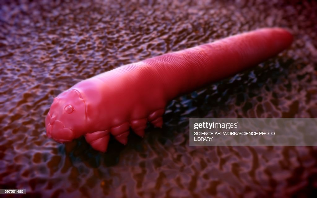 Eyelash Mite Stock Illustration Getty Images