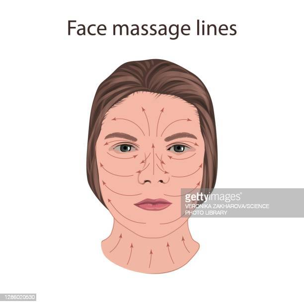 face massage lines, illustration - the ageing process stock illustrations