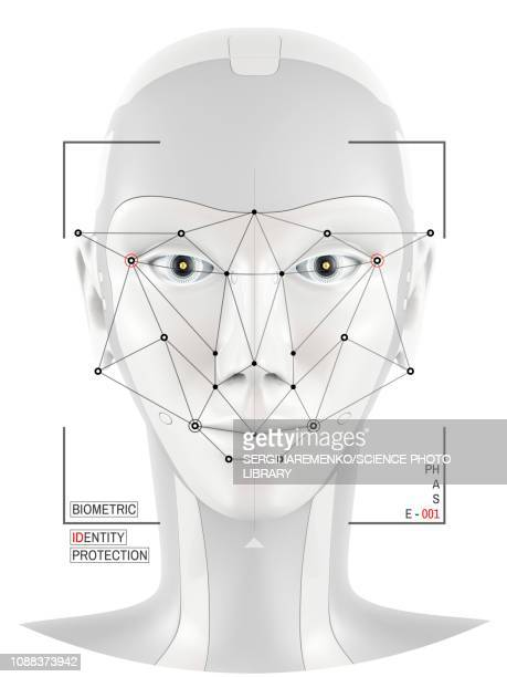 Facial identification, conceptual illustration