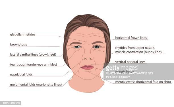 facial wrinkles, illustration - the ageing process stock illustrations