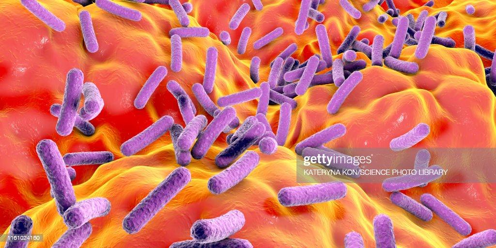 Faecalibacterium prausnitzii bacteria, illustration : stock illustration