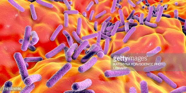faecalibacterium prausnitzii bacteria, illustration - intestine stock illustrations