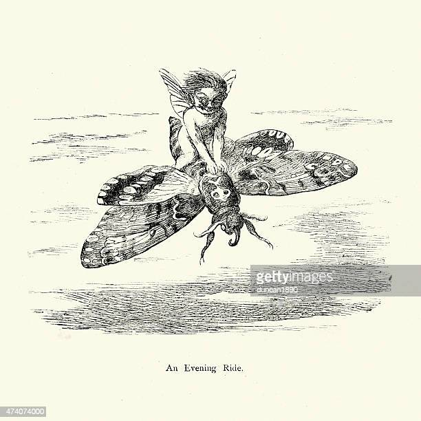 fairy flying on the back of a moth - fairy stock illustrations