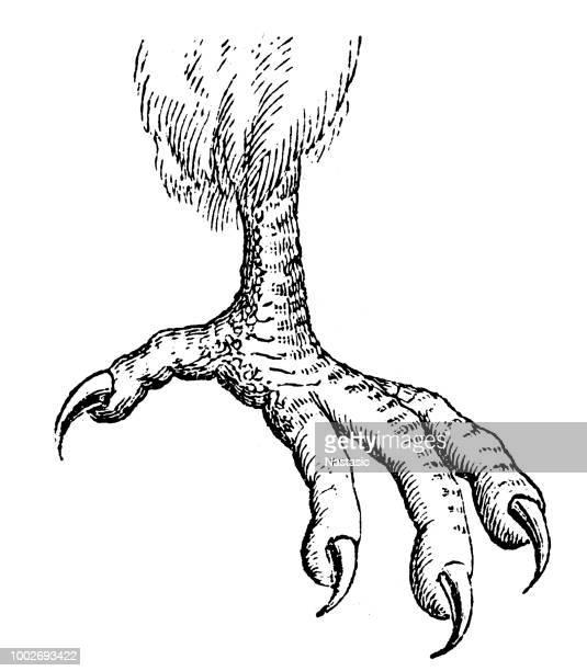 ilustrações de stock, clip art, desenhos animados e ícones de falcon foot - falcon bird