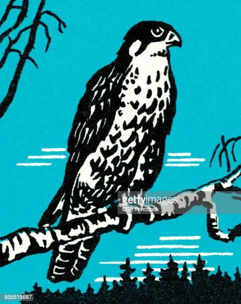falcon - falcons stock illustrations, clip art, cartoons, & icons