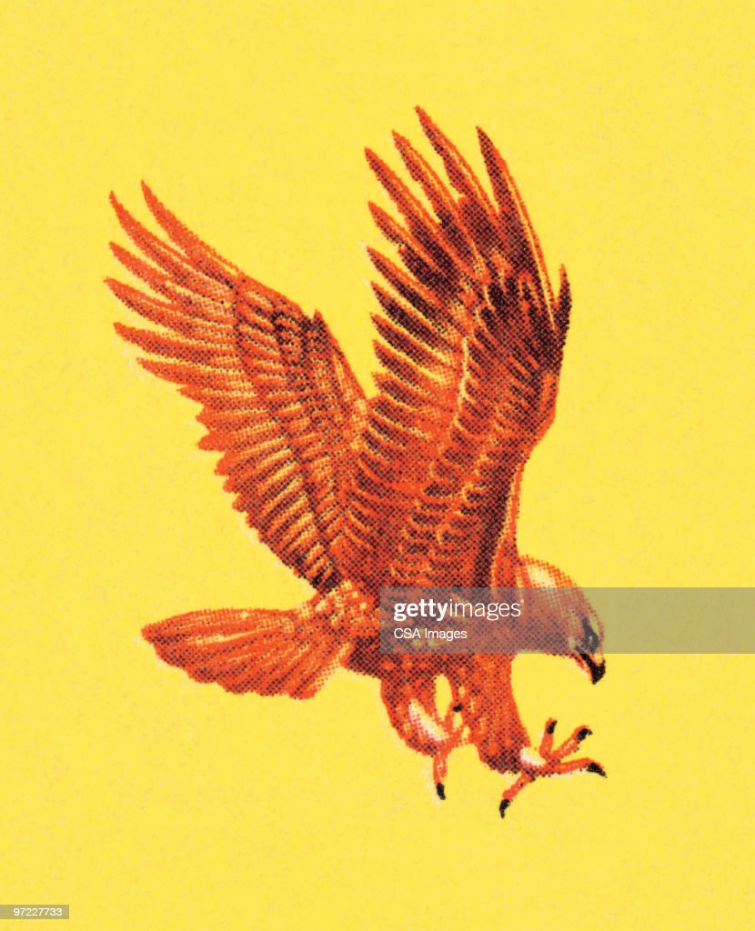Falcon : stock illustration