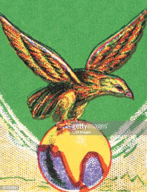 falcon - bald eagle stock illustrations