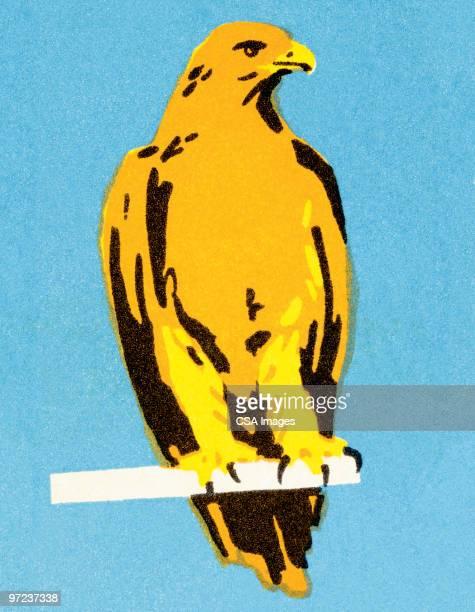 ilustrações de stock, clip art, desenhos animados e ícones de falcon - falcon bird