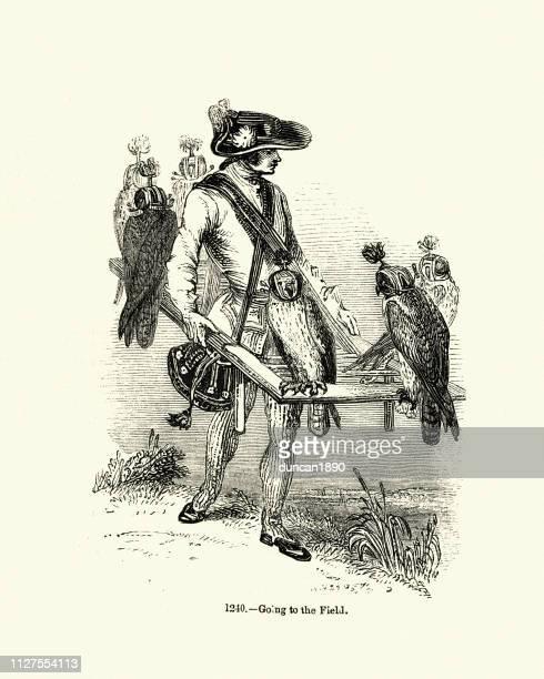 falconry, 18th century falconer with his hawks - falconry stock illustrations