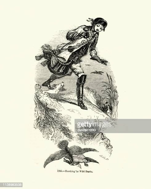 falconry, hunting for wild duck with a hawk - falconry stock illustrations