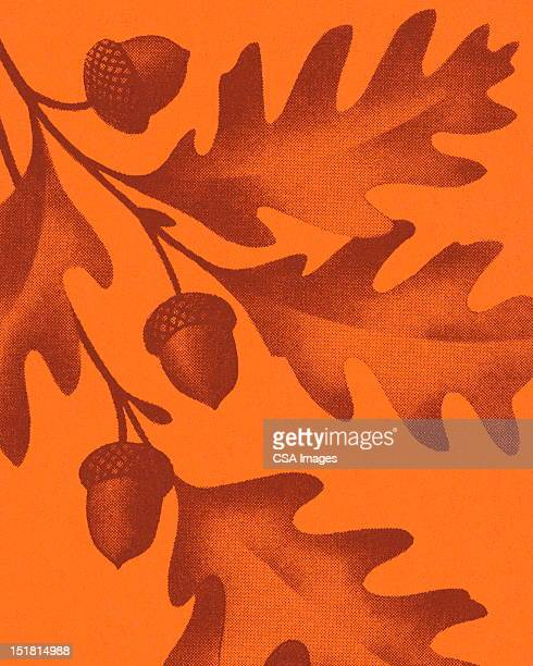fall leaves and acorns - branch stock illustrations