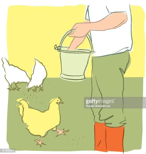 ilustrações, clipart, desenhos animados e ícones de a farmer feeding chickens - grupo mediano de animales