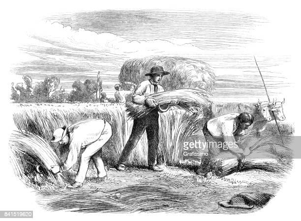 farmer making bundle of hay on field by hand 1859 - 18th century stock illustrations