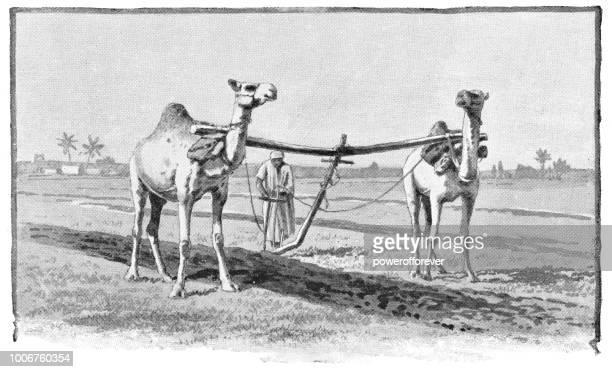 Farmer Plowing a Field in Rural Egypt - Ottoman Empire