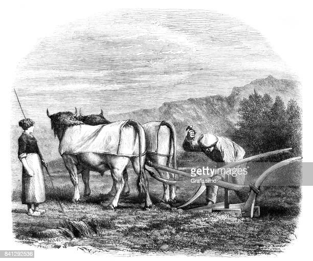 farmer with wife plowing field with oxen in basque region 1859 - en búsqueda stock illustrations