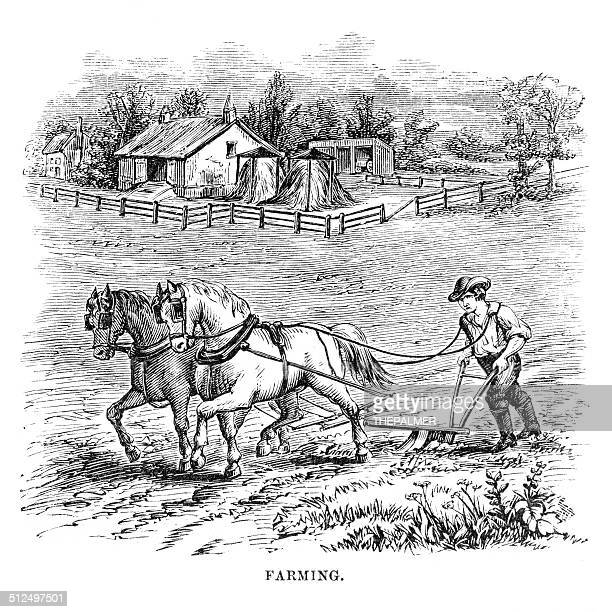farming engraving - horse family stock illustrations, clip art, cartoons, & icons
