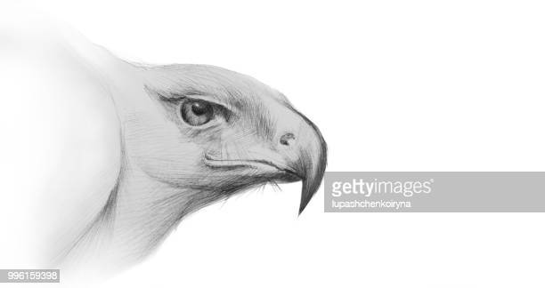 fashionable illustration portrait of a pencil drawing profile view of an eagle in the impressionist style - falcons stock illustrations, clip art, cartoons, & icons