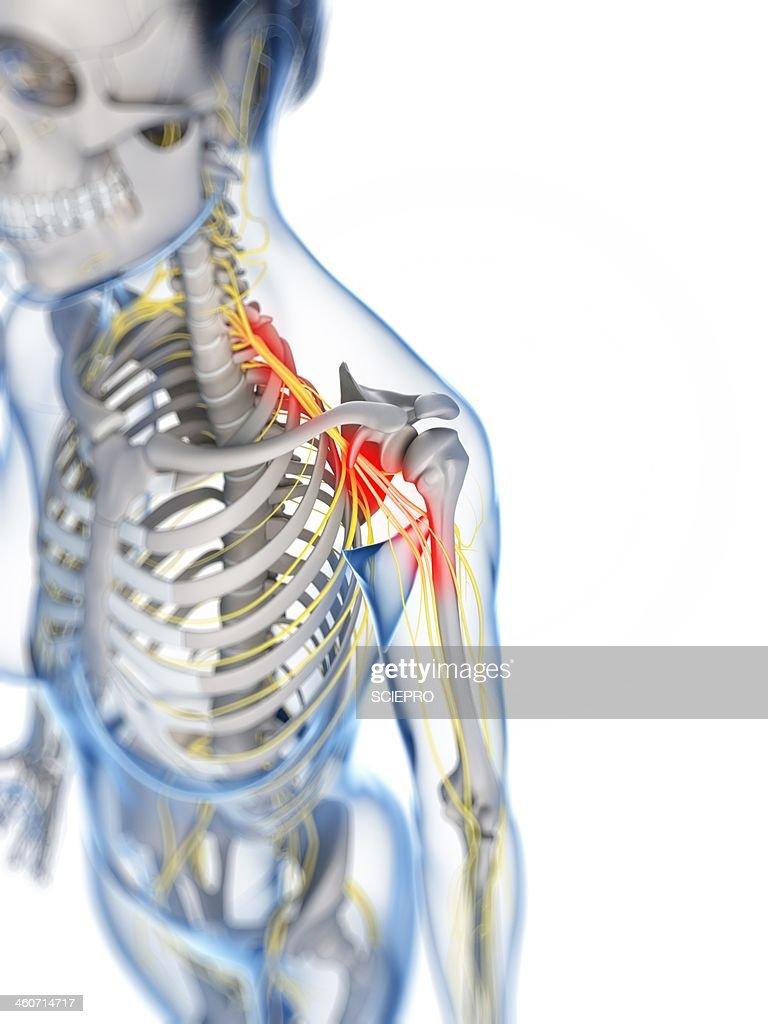 Female Anatomy Artwork Stock Illustration | Getty Images