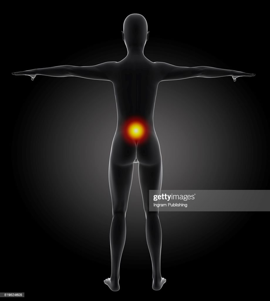 Female Anatomy With Highlighted Back Stock Illustration Getty Images