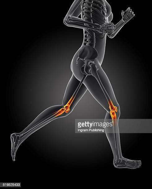 Female anatomy with highlighted knees running