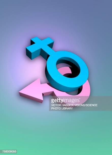 ilustraciones, imágenes clip art, dibujos animados e iconos de stock de female and male symbols, illustration - símbolo de género