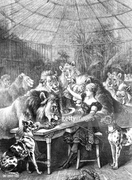 female artist in the circus feeds the lions - black and white food stock illustrations