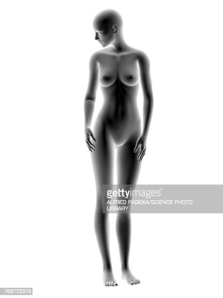 Female body, illustration