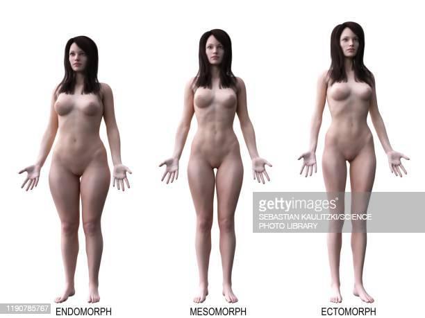 female body types, illustration - tall high stock illustrations