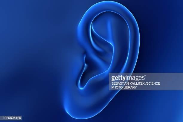 female ear, illustration - 耳点のイラスト素材/クリップアート素材/マンガ素材/アイコン素材